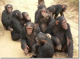 Секс у приматов – социальное действие