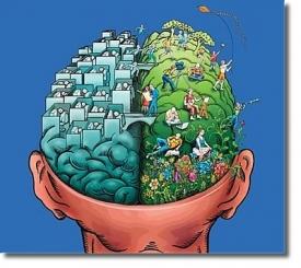 Наличие двух полушарий мозга позволяет решать две разные задачи