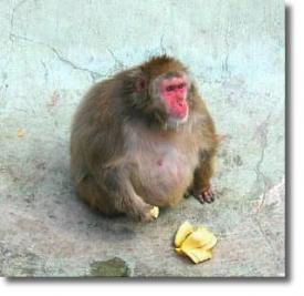 Контрольную группу макак поставили в условия, в которых они вели малоподвижный образ жизни