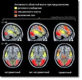 Чтение — сложнейшее упражнение для мозга