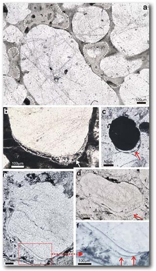 Древнейшие анаэробные бактерии