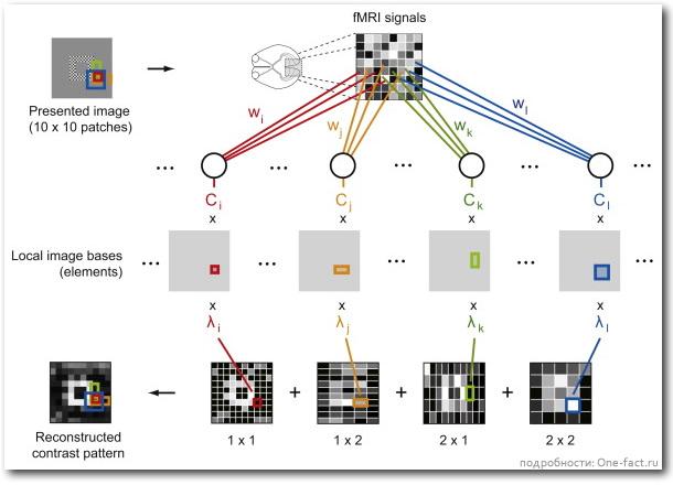 Получение изображения из мозга человека
