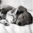 Сколько и как спят мыши, кошки, собаки, дельфины, слоны… связано с их весом