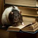 Процесс познания — сильнейшее удовольствие, способное конкурировать с тяжелыми наркотиками (результаты экспериментов)…