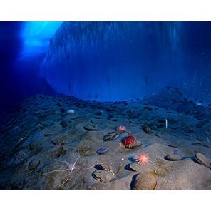 Антарктида: морское дно и лед…